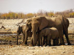 Etosha elephants at a waterhole