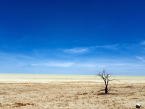 Etosha landscape with tree