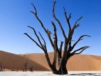 Deadvlei landscape with tree