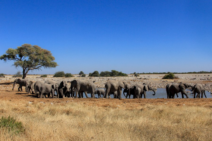 Namibia Camping Safaris- 14 Day Tour